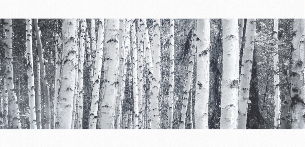 Grand Seiko SLGH005 inspired by the white birch forest next to the Shizukuishi studio